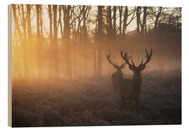 Obraz na drewnie  Two deers in Richmond Park, London - Alex Saberi