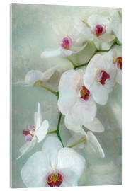 Obraz na szkle akrylowym  Composition of a white orchid with transparent texture - Alaya Gadeh
