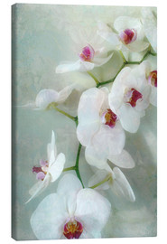 Obraz na płótnie  Composition of a white orchid with transparent texture - Alaya Gadeh