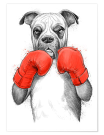 Plakat German boxer