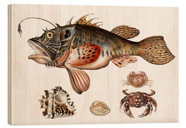 Obraz na drewnie  Deep-sea fish, crabs and sea snails - Maria Sibylla Merian