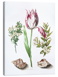 Obraz na płótnie  Tulip with two myrtle branches and two shells - Maria Sibylla Merian