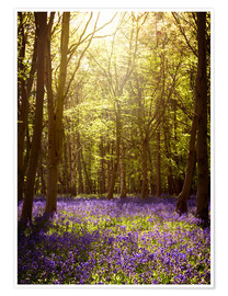Plakat Sunny forest with bluebells