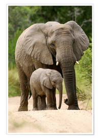 Plakat Mother and calf