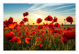 Plakat Poppies in the evening