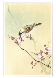 Plakat Small Bird and Blossoms