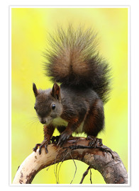 Plakat Squirrel on a branch