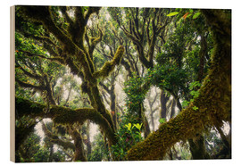 Obraz na drewnie  Old virgin forest, laurel, Madeira - Dennis Fischer