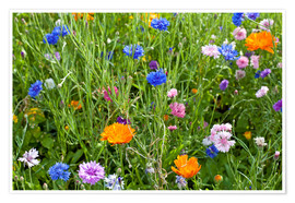 Plakat Wild flower meadow