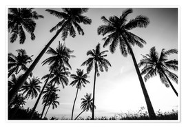 Plakat Silhouettes of palm trees