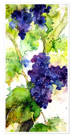 Plakat Red grapes