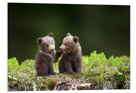 Obraz na PCV  Two young brown bears
