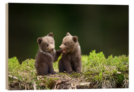 Obraz na drewnie  Two young brown bears
