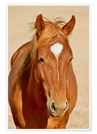 Plakat faithful look of a brown mare