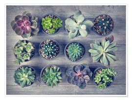 Plakat Different succulents above the black wooden background