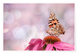 Plakat  Painted Lady