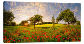 Obraz na płótnie  Poppy meadow at sunset - Michael Rucker