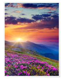 Plakat  Rhododendron blossom in the Carpathians