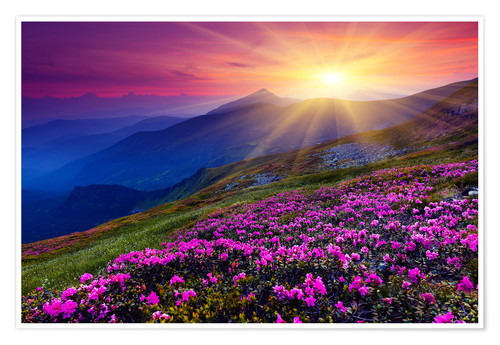 Plakat Rhododendron in the Carpathians