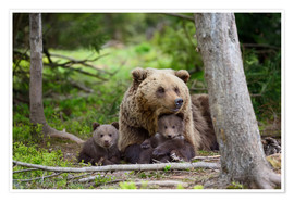 Plakat Brown bear with cubs in forest