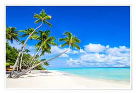 Plakat White beach and palm trees in the tropics