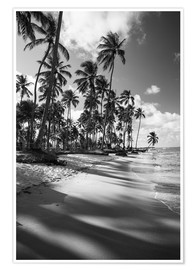 Plakat Tropical palm trees on a Brazilian beach in black and white