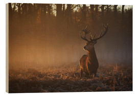 Obraz na drewnie  Stag in autumn sunrise - Alex Saberi
