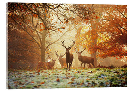 Obraz na szkle akrylowym  Stags and deer in an autumn forest with mist - Alex Saberi