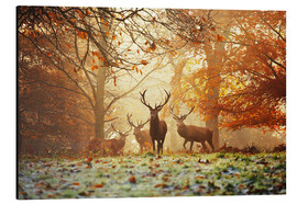 Obraz na aluminium  Stags and deer in an autumn forest with mist - Alex Saberi