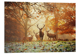 Obraz na PCV  Stags and deer in an autumn forest with mist - Alex Saberi