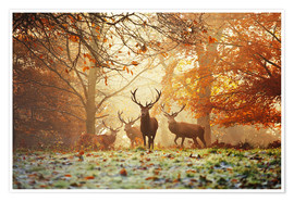 Plakat Stags and deer in an autumn forest with mist