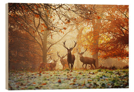 Obraz na drewnie  Stags and deer in an autumn forest with mist - Alex Saberi