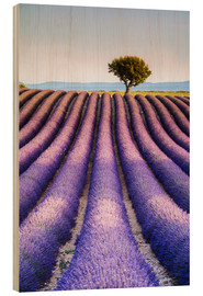 Obraz na drewnie  Tree in a lavender field, Provence - Matteo Colombo