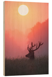 Obraz na drewnie  A male deer Stag at sunset - Alex Saberi