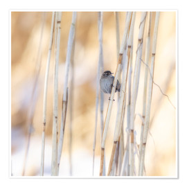 Plakat little guest in the reed
