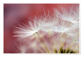 Plakat Dandelions magic