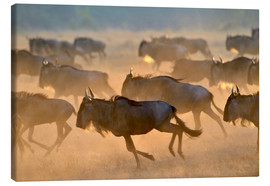 Obraz na płótnie  Wildebeests during the great migration, Serengeti - age fotostock