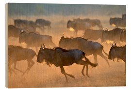 Obraz na drewnie  Wildebeests during the great migration, Serengeti - age fotostock