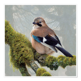 Plakat  Eurasian Jay sits on a mossy branch - Ikon Images