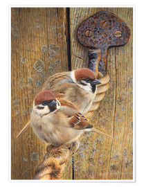 Plakat Two fat sparrows