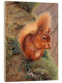 Obraz na drewnie  Squirrel with nut - Ikon Images