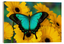 Obraz na drewnie  Sea Green Swallowtail Butterfly - Darrell Gulin