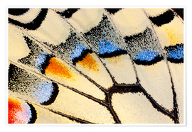 Plakat Detail of a butterfly wing