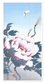 Plakat Peony with butterfly