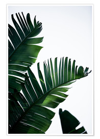 Plakat Palm Leaves 16