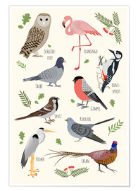 Plakat  Bird species (German) - Kidz Collection