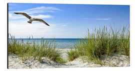 Obraz na aluminium  Seagull flight over sand dunes, Baltic Sea - Art Couture